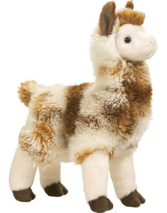 Photo of Liam Llama