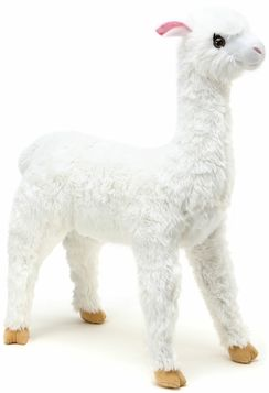 Photo of Alana Alpaca