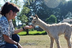The public always enjoys coming to the farms for National Alpaca Farm Days to meet alpacas up close and learn more about them.