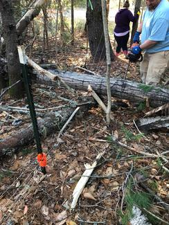 Fencing that runs through wooded areas is always susceptible to being damaged by falling trees and limbs. Repairs must be made quickly.