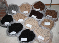Photo of YARN FROM SHOW FLEECES