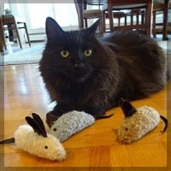 Photo of TOYS: Three BLIND Mice!