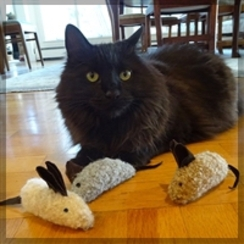 TOYS: The Irresistible Crinkle Mouse!