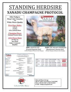 Xanadu P Champagne Protocol