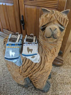 Photo of Alpaca Watching Socks - Child Size