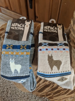 Photo of Alpaca Watching Socks - Adult