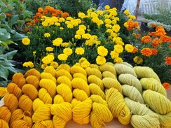 Photo of Yarn - Hand dyed, natural dyes