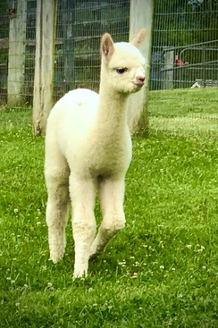 Are you  ready for Cria Season