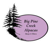 Big Pine Creek Alpacas, Sheep and Fibers - Logo