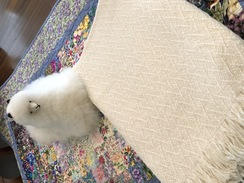Photo of Custom Design Alpaca Blanket