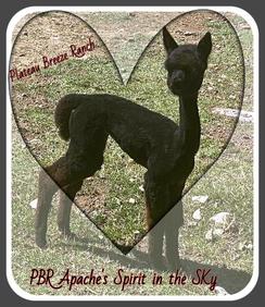 PBR Apche's Spirit in the Sky