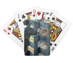 Kissing Alpaca Playing Cards