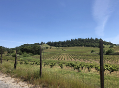 Here is a particularly beautiful vineyard we passed.