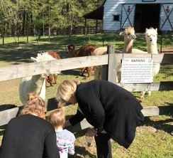 Photo of Alpaca Feeding Experience: Mon.-Thurs.