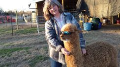 Photo of Yarn, Med. Fawn alpaca yarn