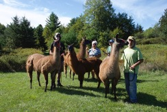 At the end of a Llama Nature Trails Walk - September 2020!