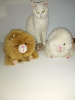 Alpaca Fur Cats & free toy
