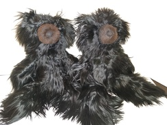 Only 1 left!   Rare Black Suri Bears