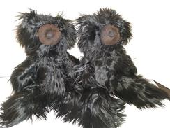 Rare Black Suri Bears