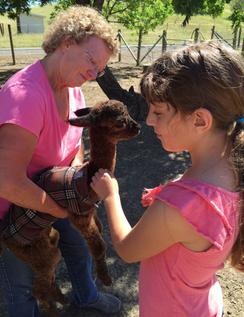 A baby alpaca called a