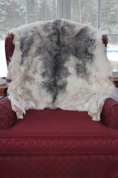White Goat Pelt with Grey Dorsal Stripe