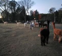 Brokering of alpacas
