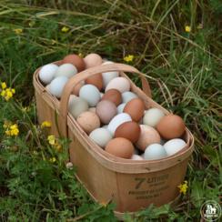 Rainbow egg variety