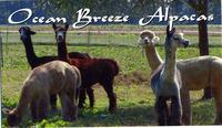Ocean Breeze Alpacas - Logo