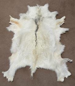 Goat Pelt - White w/Blue Dorsal Stripe