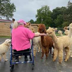 Photo of Alpaca Farm Tour