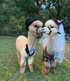 2 Pacas to Party!
