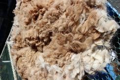 Huacaya fleece