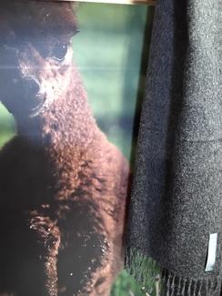 100% Baby Alpaca Scarf