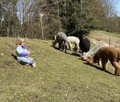 Photo Shoot Location with Alpacas