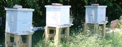 The Bee Yard