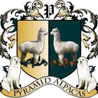 Pyramid Alpaca - Logo