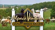 Alpaca Ventures - Logo