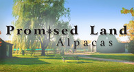 Promised Land Alpacas - Logo