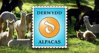 Derwydd Alpacas - Logo