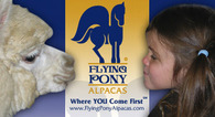 Flying Pony Alpacas, LLC - Logo
