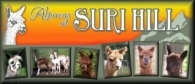 Alpacas at Suri Hill, LLC - Logo