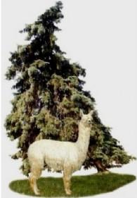 Bent Pine Alpaca Farm - Logo