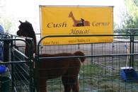 Cush Corner Alpacas - Logo