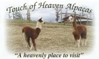 Touch of Heaven Alpacas - Logo