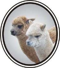 Lippencott Alpacas - Logo
