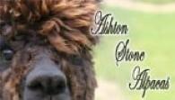 Ashton Stone Alpacas - Logo