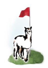 Varners Alpaca Links - Logo