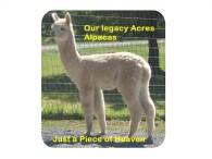 Our Legacy Acres Alpacas - Logo