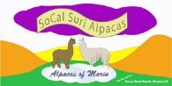 SoCal Suri Alpacas - Logo