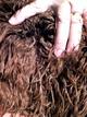 amazing fleece!